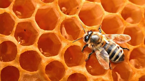 Bienenwachs