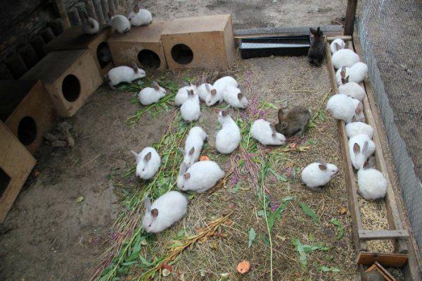 Kaninchen in der Voliere