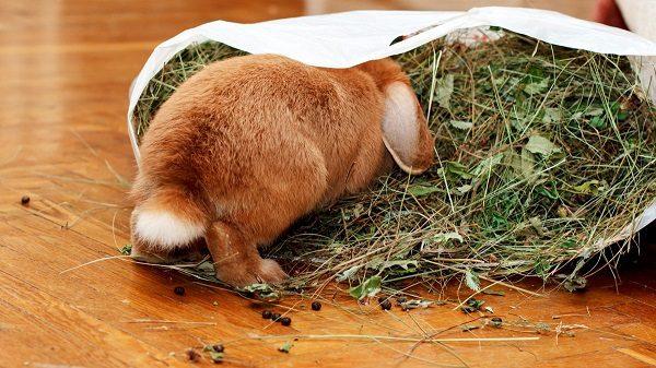 Kaninchen, kletterte in die Tasche