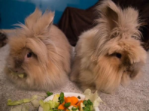 Was ein Kaninchen füttern