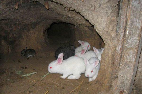 Kleine Kaninchen in der Grube