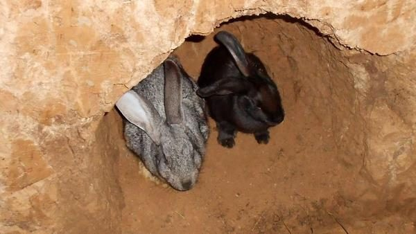 Kaninchen und Kaninchen in einem Loch
