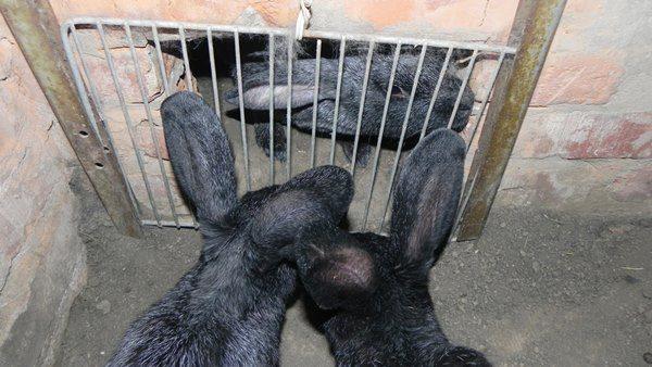 Schieber für Kaninchengrube