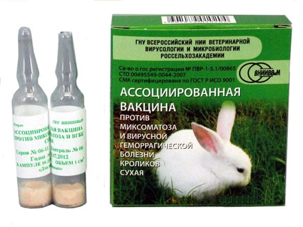 Der Impfstoff gegen Myxomatose und virale hämorrhagische Erkrankungen von Kaninchen ist trocken
