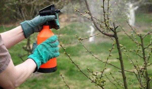 Frühjahrsbearbeitung von Bäumen mit Fungiziden