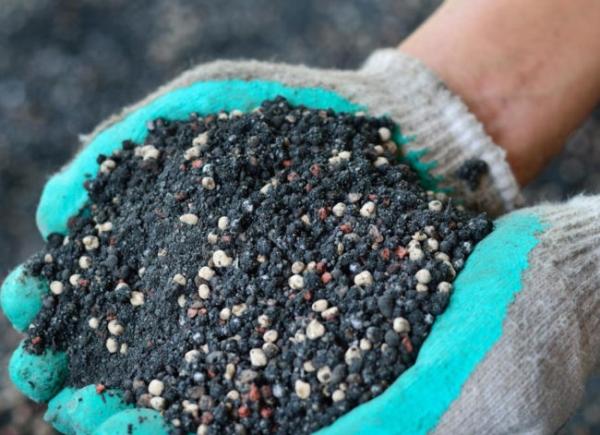 Bevor Sie Kirschen pflanzen, müssen Sie die Fläche mehrmals ausheben, Düngemittel, Superphosphat, Kompost oder Mist anwenden