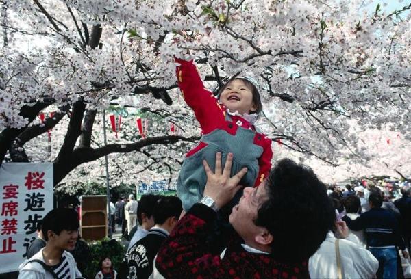 Wenn Sakura blüht, werden die Arbeitstage in Japan abgesagt und der Nationalfeiertag wird zum Hanami erklärt