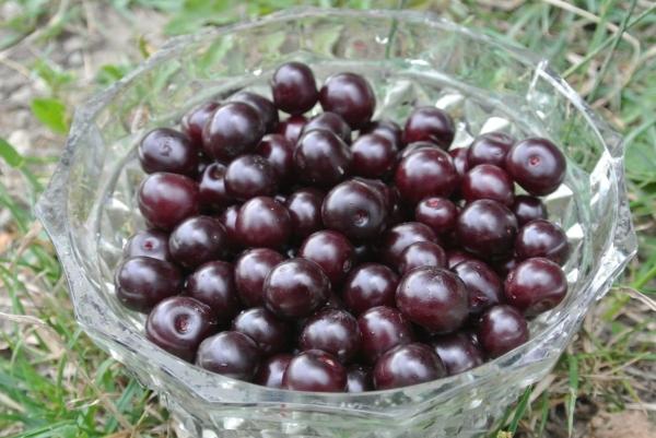Vladimirskaya-Kirsche hat viele Formen, der Geschmack ist süß und sauer, schwarz und rot