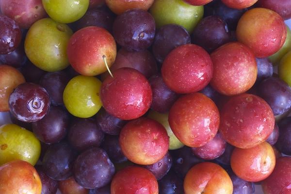 Wählen Sie die besten Pflaumensorten für den Anbau nach den Merkmalen