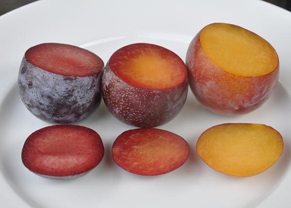 Die ungewöhnlichsten Hybriden aus Aprikose, Pfirsich, Pflaume und Apfel, ihre Beschreibung, Vor- und Nachteile