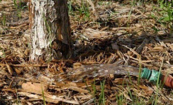 Herbstwasser-Aufladungsbewässerungskirsche