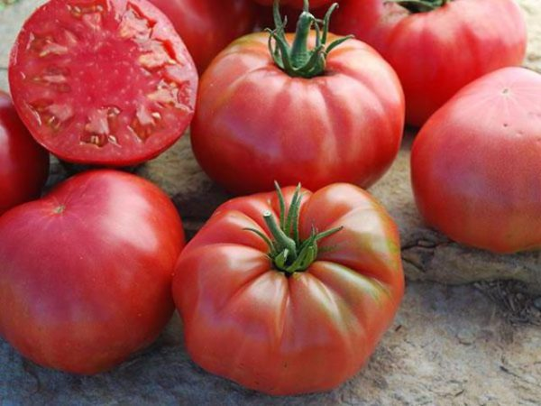 Tomatenzucker-Bisons hautnah