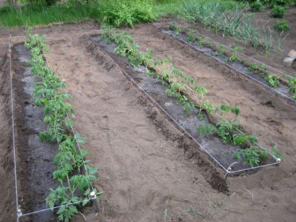 Sugar Bison Garden Bed mit Tomaten