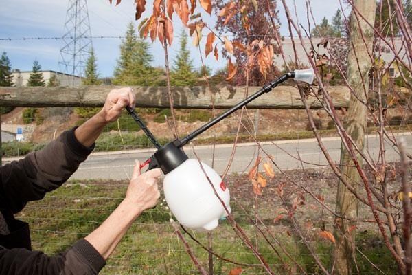 Jeder Baum wird mit einem Baldachin mit einem bestimmten Ziel besprüht.