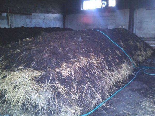 Fertigkompost für den Anbau von Pilzen
