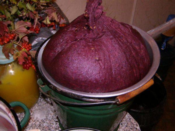 Um den Wein aromatisch und lecker zu machen, ist es notwendig, jede Beere nach Insekten auszusortieren, grüne und verdorbene Beeren zu trennen.