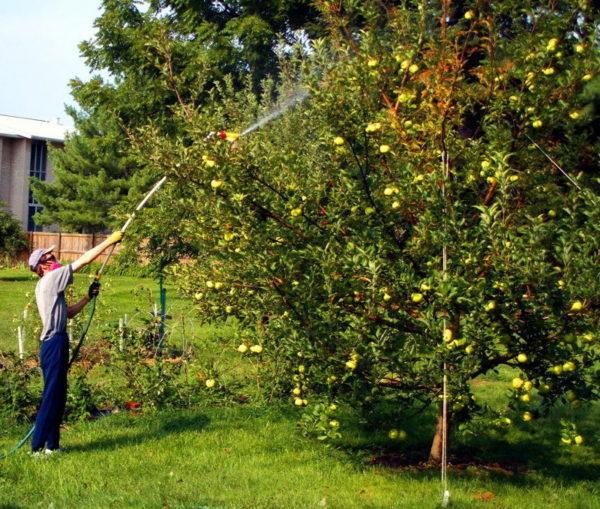 Verarbeitungsbedingungen für Obstbäume