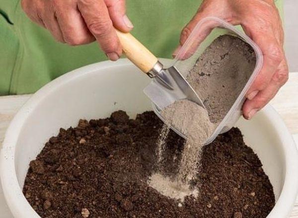Asche kann mit Erde gemischt und dann um Bäume herum verstreut werden.