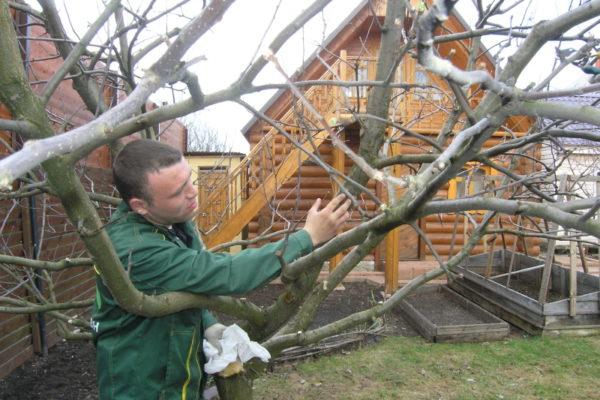 Phosphatdünger stärken Bäume
