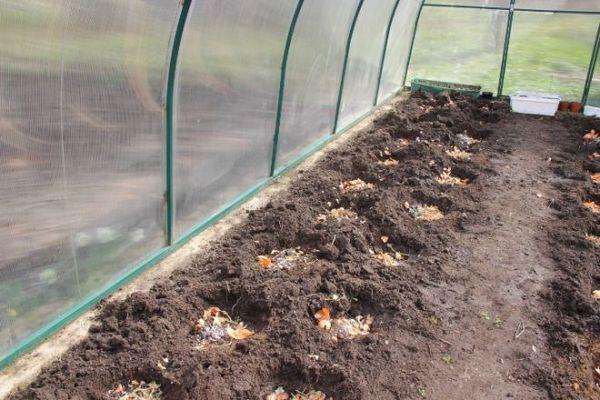 Die Brunnen oder Beete müssen vor dem Pflanzen mit organischem Material versetzt werden.