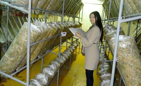 Gestelle für den Anbau von Austernpilzen
