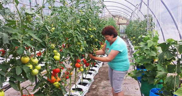 Gurken und Tomaten isolieren sich besser